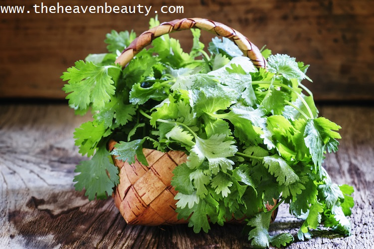 Coriander leaves for soft and pink lips
