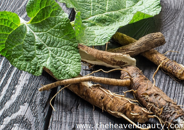 Burdock root - Onion Shampoo for Hair Growth